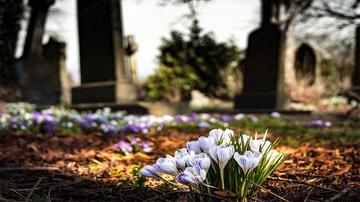 graveyard-flower.jpg