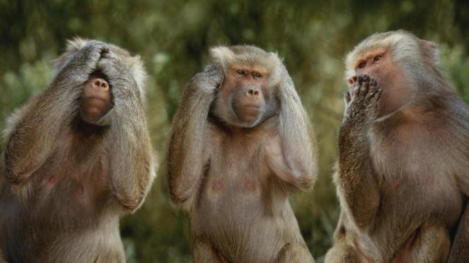 The 3 Wise Monkeys Of Gandhi