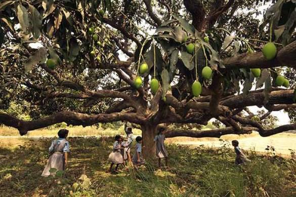 wpid-mango_tree